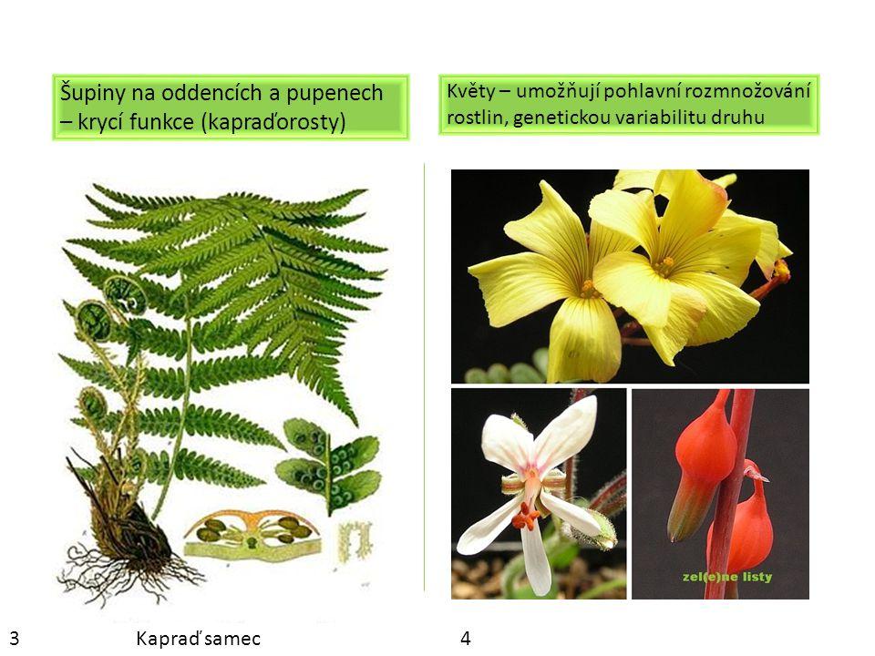 Trny – ochranná funkce (dřišťál) -zvyšují konkurenceschopnost, chrání před predátory Úponky – umožňují rostlině přichytit se ke svislému podkladu, a tím dostat se na stanoviště s minimální konkurencí jinými druhy.
