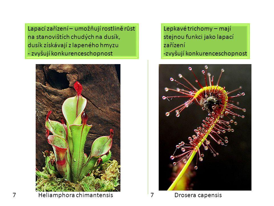 PROCVIČOVÁNÍ: Rozliš metamorfózu stonku a metamorfózu listu: METAMORFÓZA LISTU METAMORFÓZA STONKU lapací zařízení masožravek šlahouny oddenky úponky hrachu trny dřišťálu oddenkové hlízy kolce brachyblasty květy šupiny na oddencích