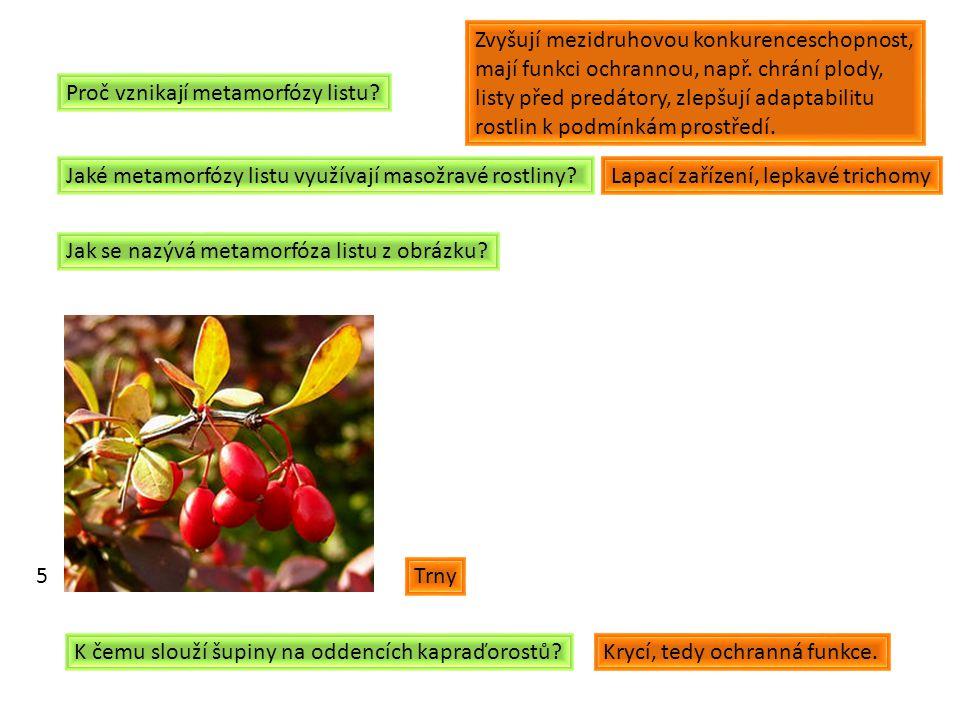 Proč vznikají metamorfózy listu.Jaké metamorfózy listu využívají masožravé rostliny.