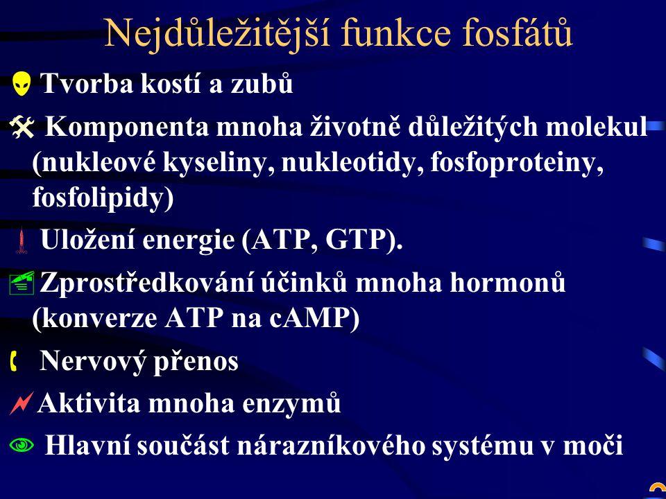 Nejdůležitější funkce fosfátů  Tvorba kostí a zubů  Komponenta mnoha životně důležitých molekul (nukleové kyseliny, nukleotidy, fosfoproteiny, fosfolipidy)  Uložení energie (ATP, GTP).