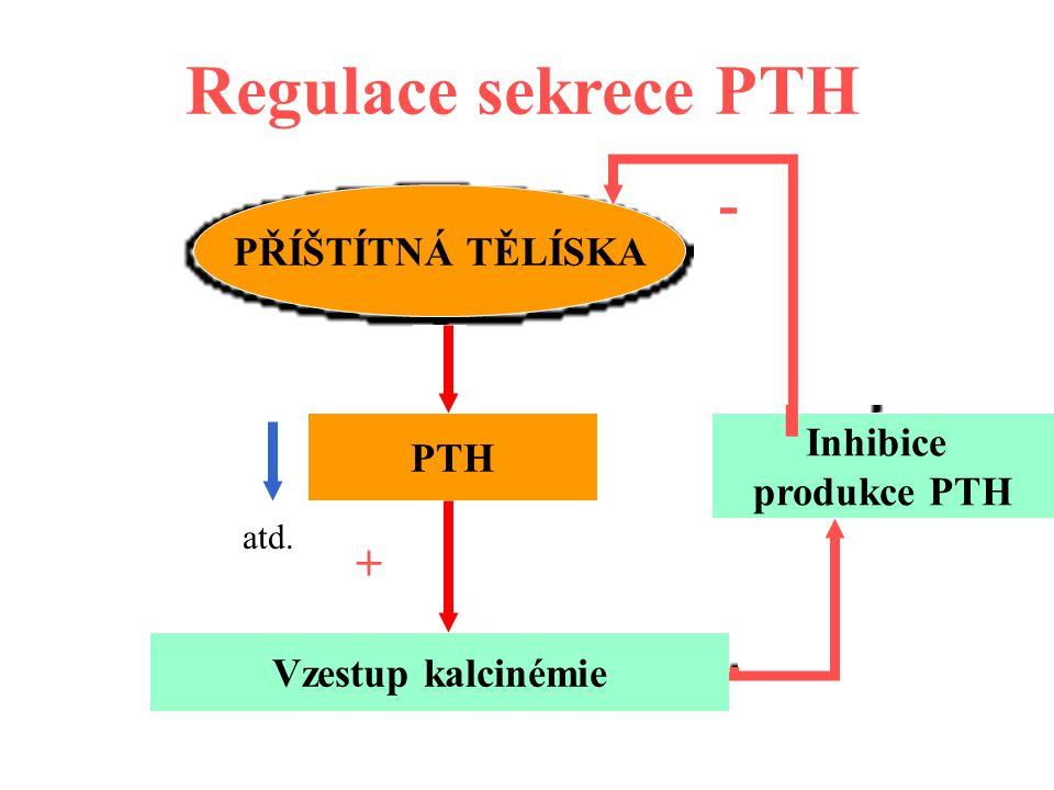 Regulace sekrece PTH PŘÍŠTÍTNÁ TĚLÍSKA PTH Vzestup kalcinémie Inhibice produkce PTH + - - atd.