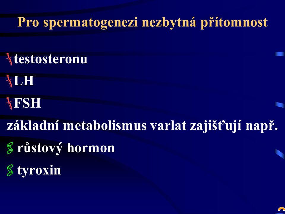 Pro spermatogenezi nezbytná přítomnost  testosteronu  LH  FSH základní metabolismus varlat zajišťují např.
