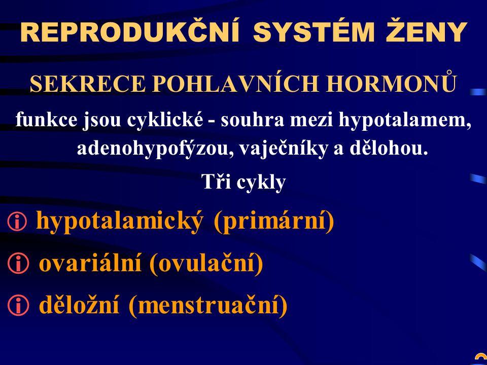 REPRODUKČNÍ SYSTÉM ŽENY SEKRECE POHLAVNÍCH HORMONŮ funkce jsou cyklické - souhra mezi hypotalamem, adenohypofýzou, vaječníky a dělohou.