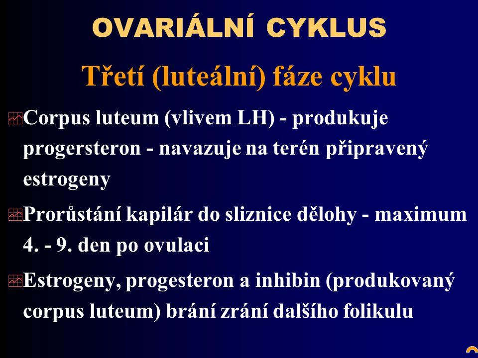 OVARIÁLNÍ CYKLUS Třetí (luteální) fáze cyklu  Corpus luteum (vlivem LH) - produkuje progersteron - navazuje na terén připravený estrogeny  Prorůstání kapilár do sliznice dělohy - maximum 4.