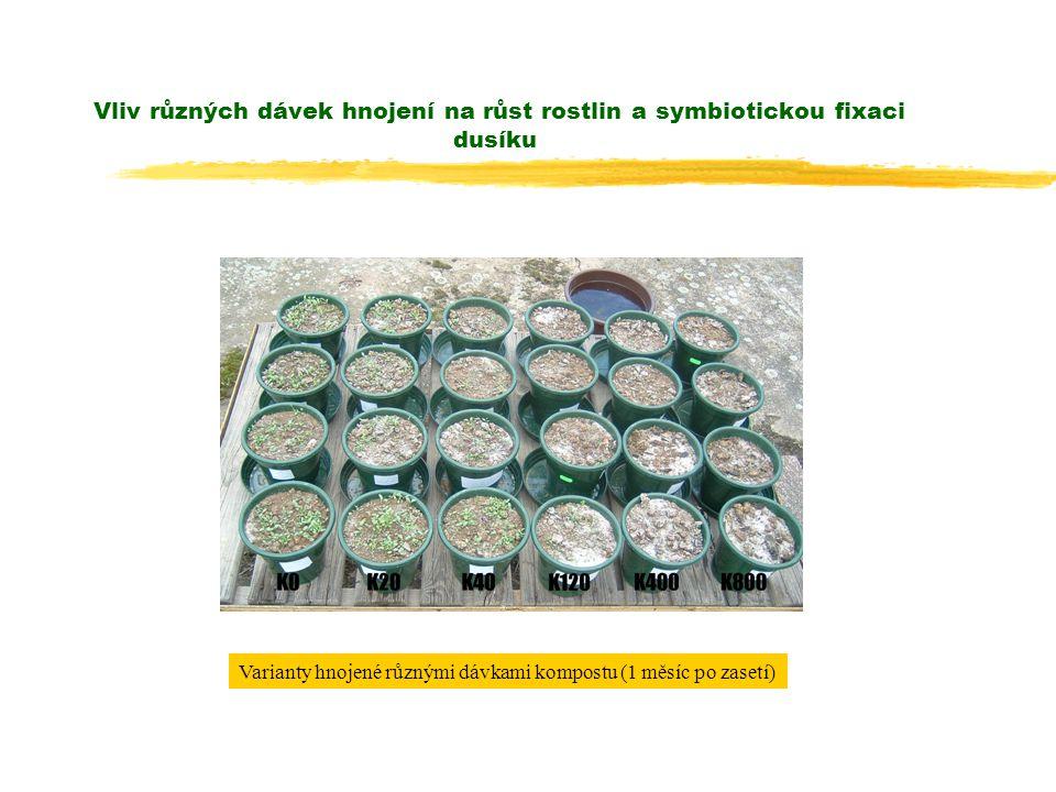 Vliv různých dávek hnojení na růst rostlin a symbiotickou fixaci dusíku Varianty hnojené různými dávkami kompostu (1 měsíc po zasetí)