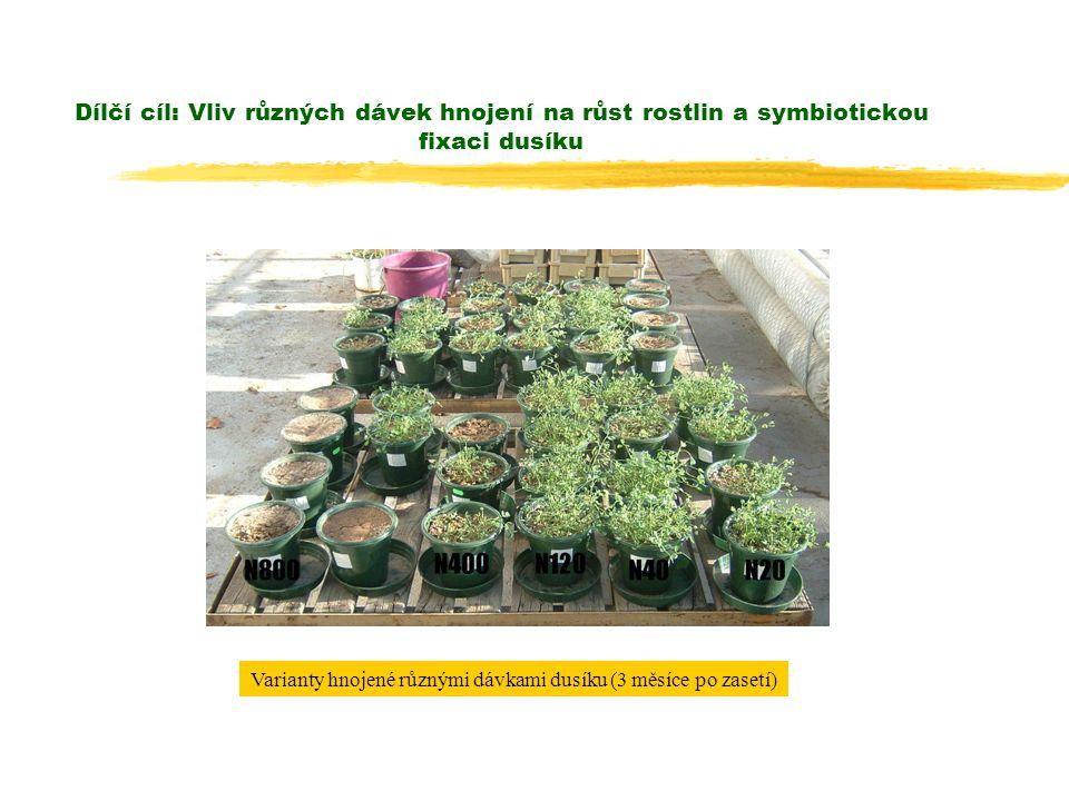 Dílčí cíl: Vliv různých dávek hnojení na růst rostlin a symbiotickou fixaci dusíku Varianty hnojené různými dávkami dusíku (3 měsíce po zasetí)