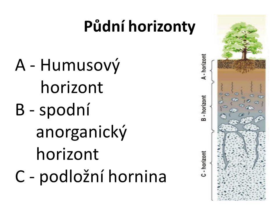 Půdní horizonty A - Humusový horizont B - spodní anorganický horizont C - podložní hornina