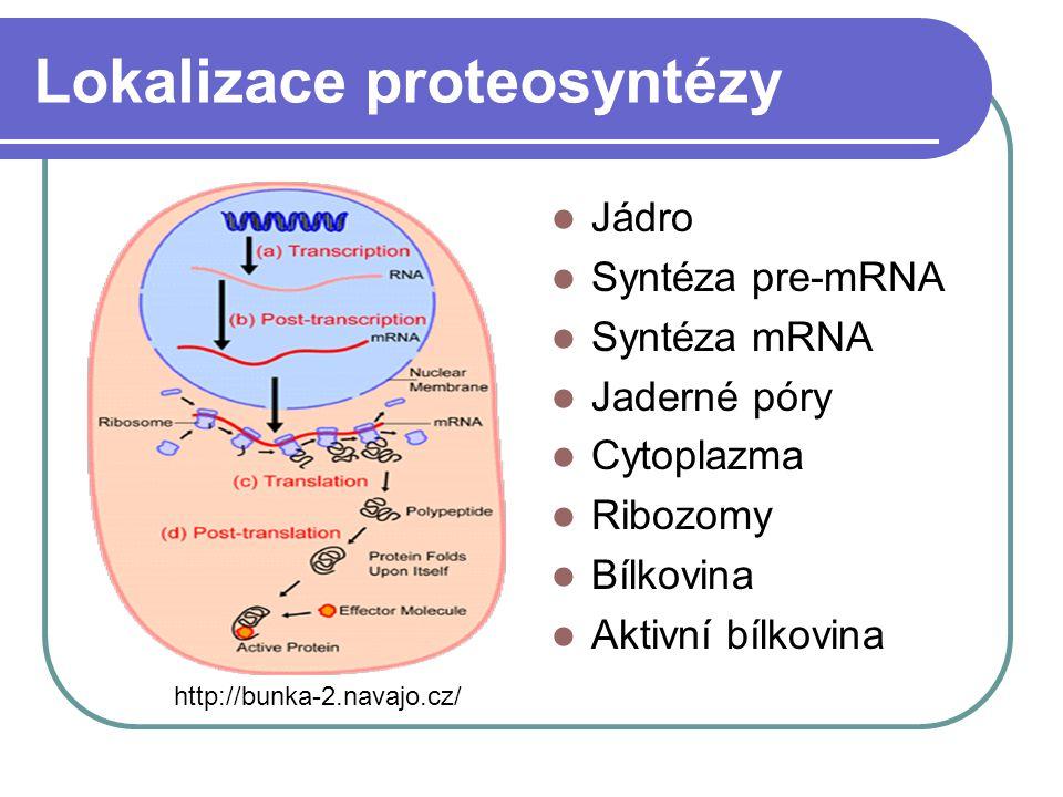 Lokalizace proteosyntézy Jádro Syntéza pre-mRNA Syntéza mRNA Jaderné póry Cytoplazma Ribozomy Bílkovina Aktivní bílkovina http://bunka-2.navajo.cz/