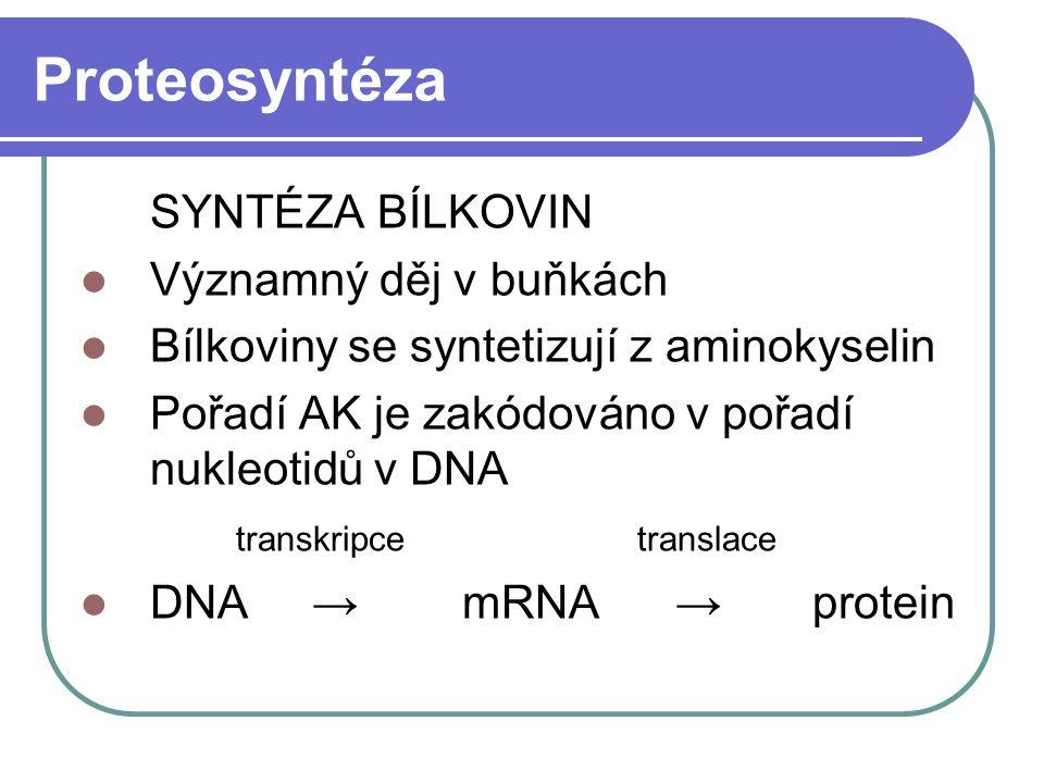 Proteosyntéza SYNTÉZA BÍLKOVIN Významný děj v buňkách Bílkoviny se syntetizují z aminokyselin Pořadí AK je zakódováno v pořadí nukleotidů v DNA transk