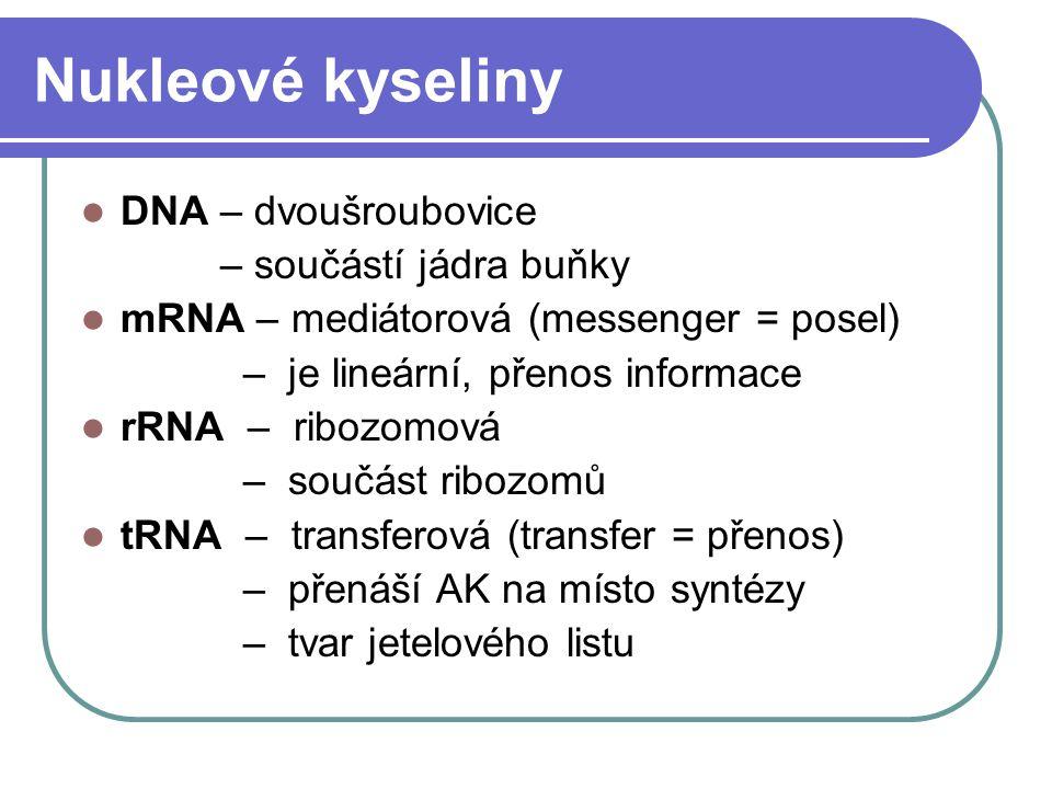 Nukleové kyseliny DNA – dvoušroubovice – součástí jádra buňky mRNA – mediátorová (messenger = posel) – je lineární, přenos informace rRNA – ribozomová