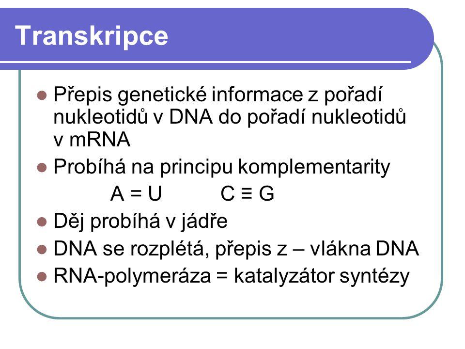 Transkripce Přepis genetické informace z pořadí nukleotidů v DNA do pořadí nukleotidů v mRNA Probíhá na principu komplementarity A = U C ≡ G Děj probí
