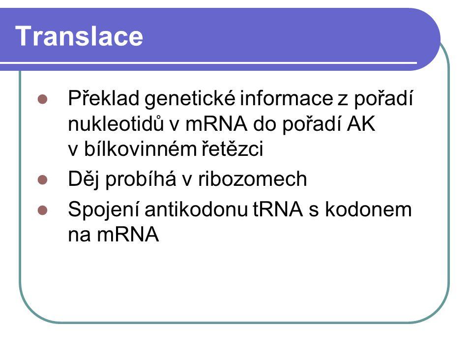 Translace Překlad genetické informace z pořadí nukleotidů v mRNA do pořadí AK v bílkovinném řetězci Děj probíhá v ribozomech Spojení antikodonu tRNA s