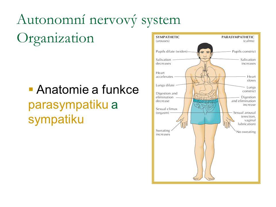 Autonomní nervový system Organization  Anatomie a funkce parasympatiku a sympatiku