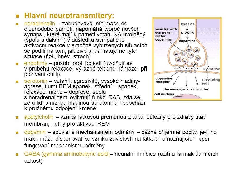 Hlavní neurotransmitery: noradrenalin – zabudovává informace do dlouhodobé paměti, napomáhá tvorbě nových synapsí, které mají k paměti vztah.