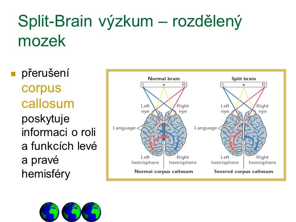 Split-Brain výzkum – rozdělený mozek přerušení corpus callosum poskytuje informaci o roli a funkcích levé a pravé hemisféry