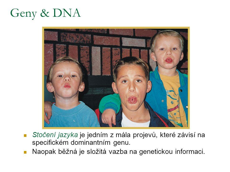 Geny & DNA Stočení jazyka je jedním z mála projevů, které závisí na specifickém dominantním genu. Naopak běžná je složitá vazba na genetickou informac