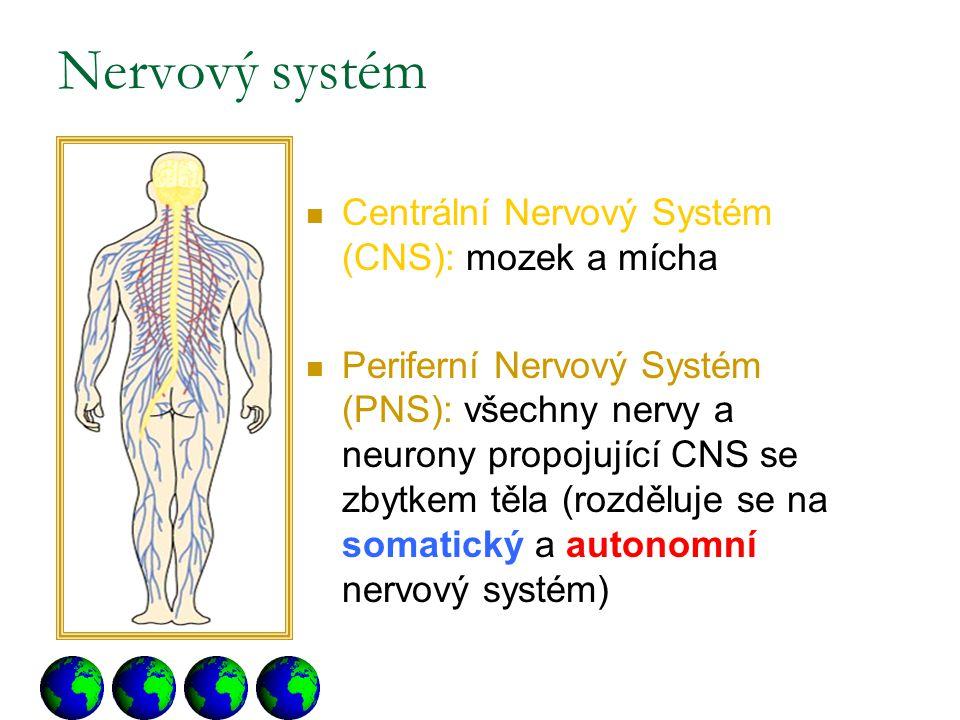 Nervový systém Centrální Nervový Systém (CNS): mozek a mícha Periferní Nervový Systém (PNS): všechny nervy a neurony propojující CNS se zbytkem těla (rozděluje se na somatický a autonomní nervový systém)