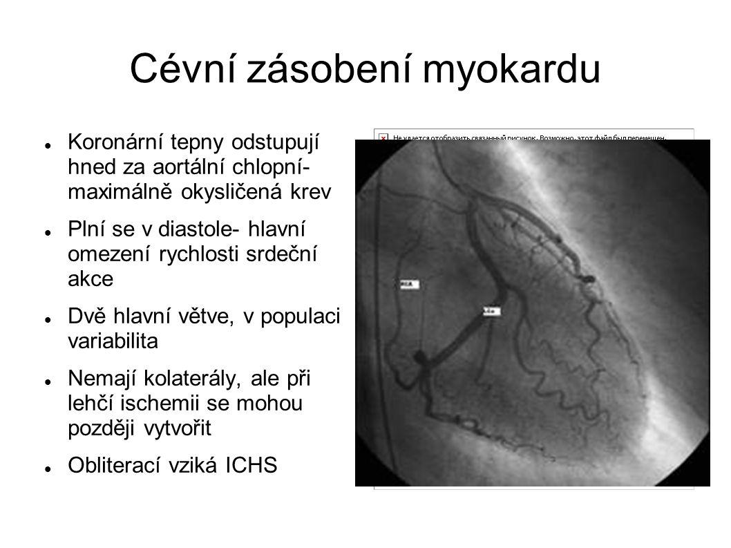 Cévní zásobení myokardu Koronární tepny odstupují hned za aortální chlopní- maximálně okysličená krev Plní se v diastole- hlavní omezení rychlosti srd