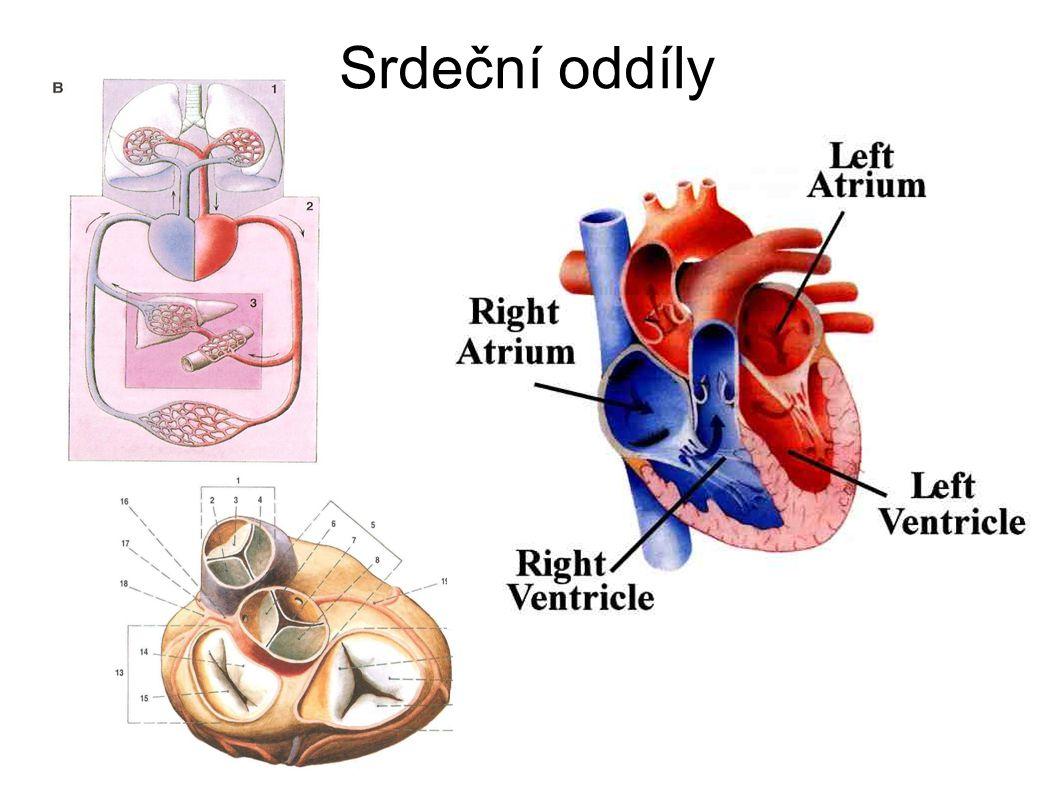 Srdeční oddíly