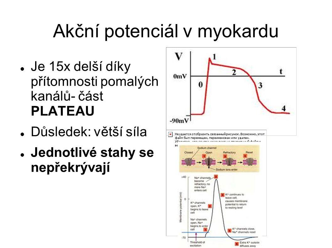 Akční potenciál v myokardu Je 15x delší díky přítomnosti pomalých kanálů- část PLATEAU Důsledek: větší síla Jednotlivé stahy se nepřekrývají