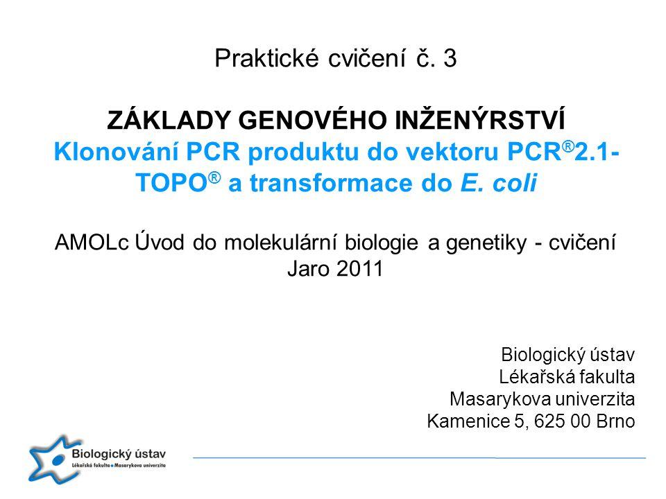Biologický ústav Lékařská fakulta Masarykova univerzita Kamenice 5, 625 00 Brno Praktické cvičení č. 3 ZÁKLADY GENOVÉHO INŽENÝRSTVÍ Klonování PCR prod