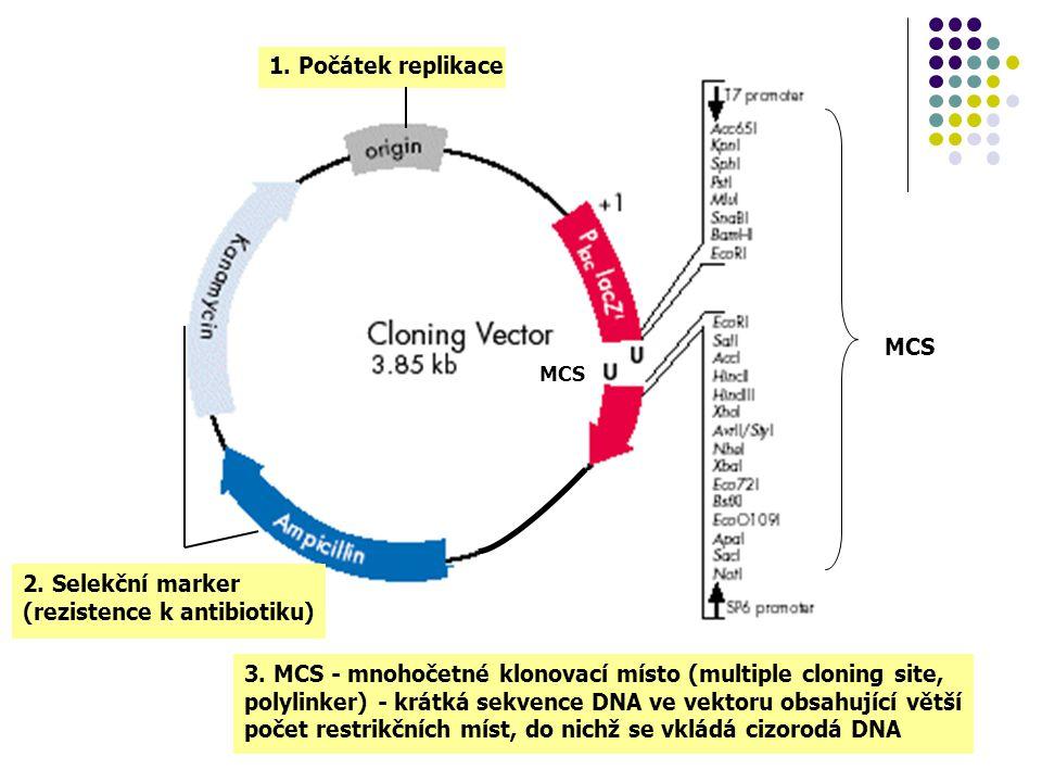 MCS 3. MCS - mnohočetné klonovací místo (multiple cloning site, polylinker) - krátká sekvence DNA ve vektoru obsahující větší počet restrikčních míst,
