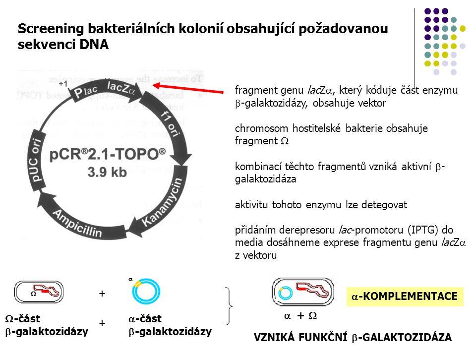 Screening bakteriálních kolonií obsahující požadovanou sekvenci DNA fragment genu lacZ , který kóduje část enzymu  -galaktozidázy, obsahuje vektor c