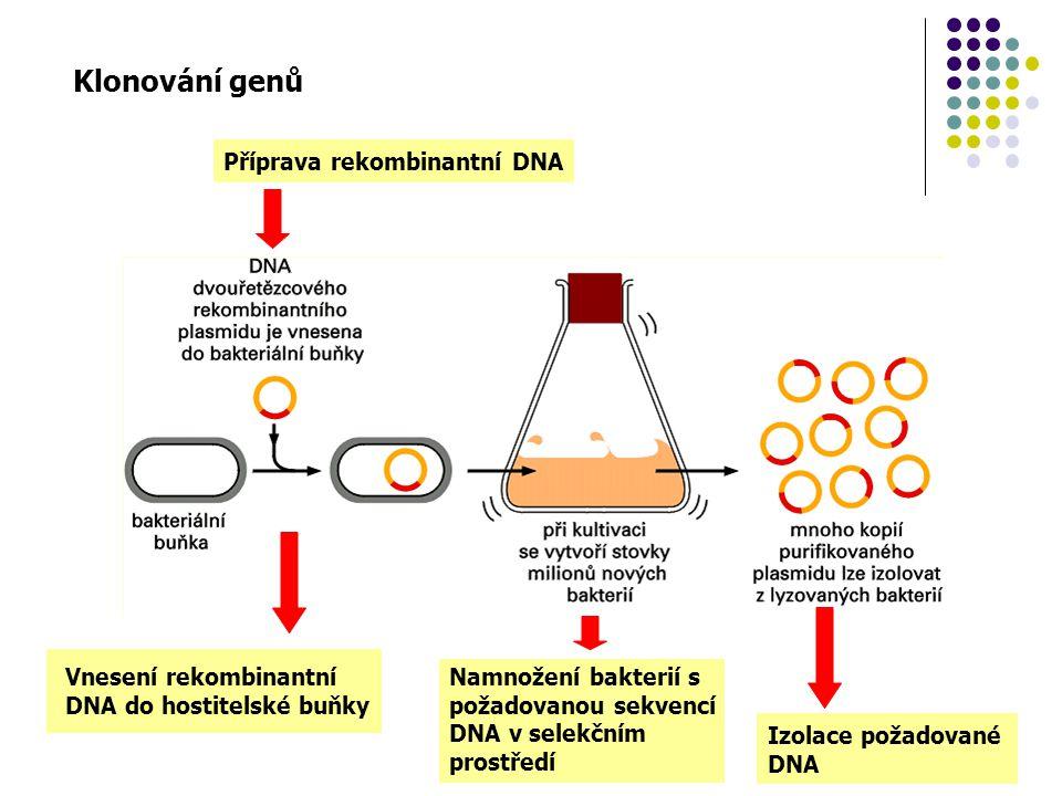 Klonování genů Příprava rekombinantní DNA Vnesení rekombinantní DNA do hostitelské buňky Namnožení bakterií s požadovanou sekvencí DNA v selekčním pro