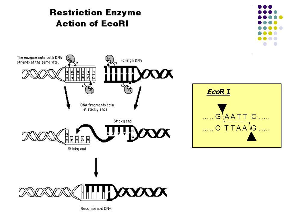 Transformace vzniklého konstruktu do buněk E.
