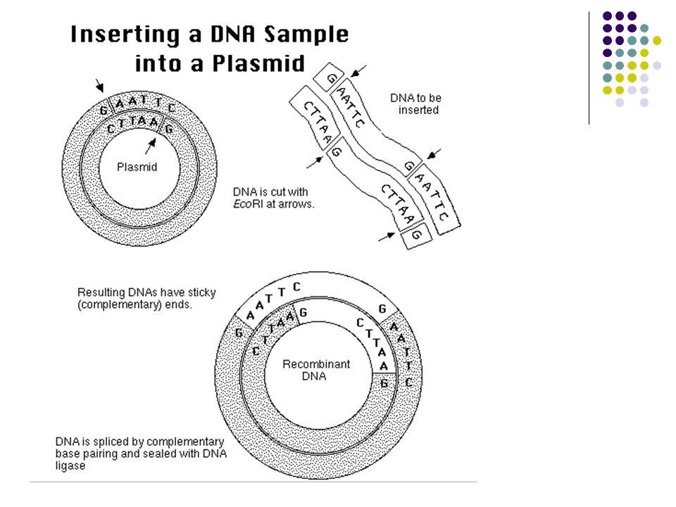 Vektory Klonovací vektor - replikon použitý k zavedení cizorodé DNA do buňky Expresní vektor - klonovací vektor obsahující regulační sekvence umožňující expresi do něj vloženého cizorodého genu (cizorodé DNA) PLAZMID BAKTERIOFÁG KOSMID BAC - umělý bakteriální chromozom YAC - umělý kvasinkový chromozom