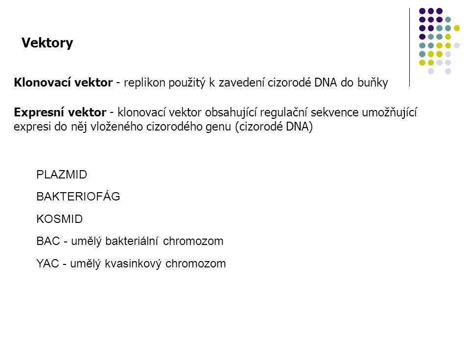 Vektory Klonovací vektor - replikon použitý k zavedení cizorodé DNA do buňky Expresní vektor - klonovací vektor obsahující regulační sekvence umožňují