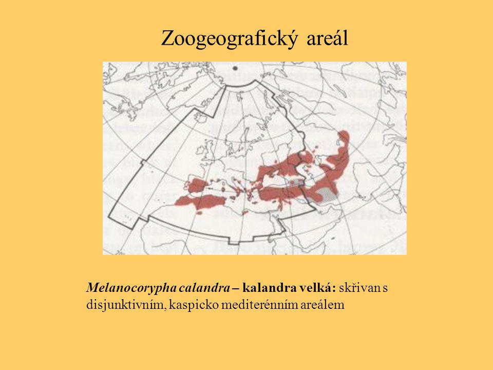 Zoogeografický areál Melanocorypha calandra – kalandra velká: skřivan s disjunktivním, kaspicko mediterénním areálem