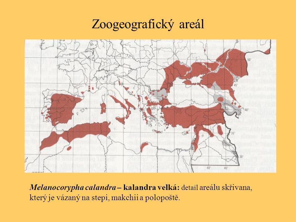 Zoogeografický areál Melanocorypha calandra – kalandra velká: detail areálu skřivana, který je vázaný na stepi, makchii a polopoště.