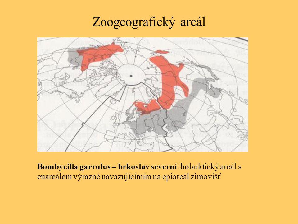 Zoogeografický areál Bombycilla garrulus – brkoslav severní: holarktický areál s euareálem výrazně navazujícímím na epiareál zimovišť