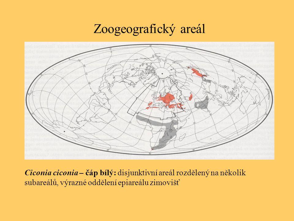 Zoogeografický areál Ciconia ciconia – čáp bílý: disjunktivní areál rozdělený na několik subareálů, výrazné oddělení epiareálu zimovišť