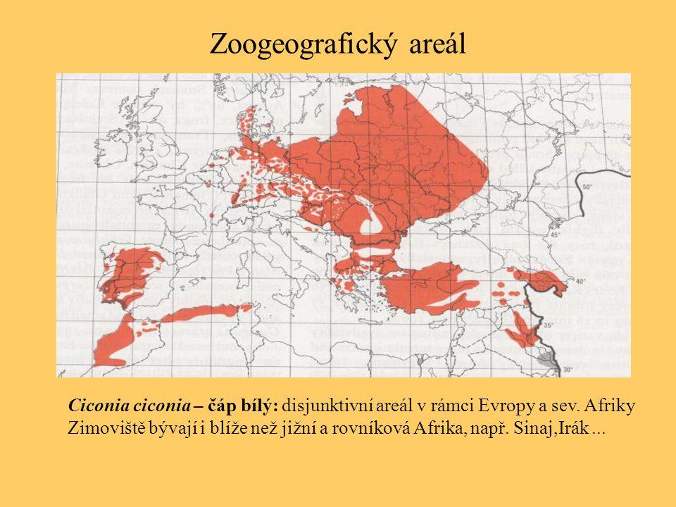 Zoogeografický areál Ciconia ciconia – čáp bílý: disjunktivní areál v rámci Evropy a sev. Afriky Zimoviště bývají i blíže než jižní a rovníková Afrika