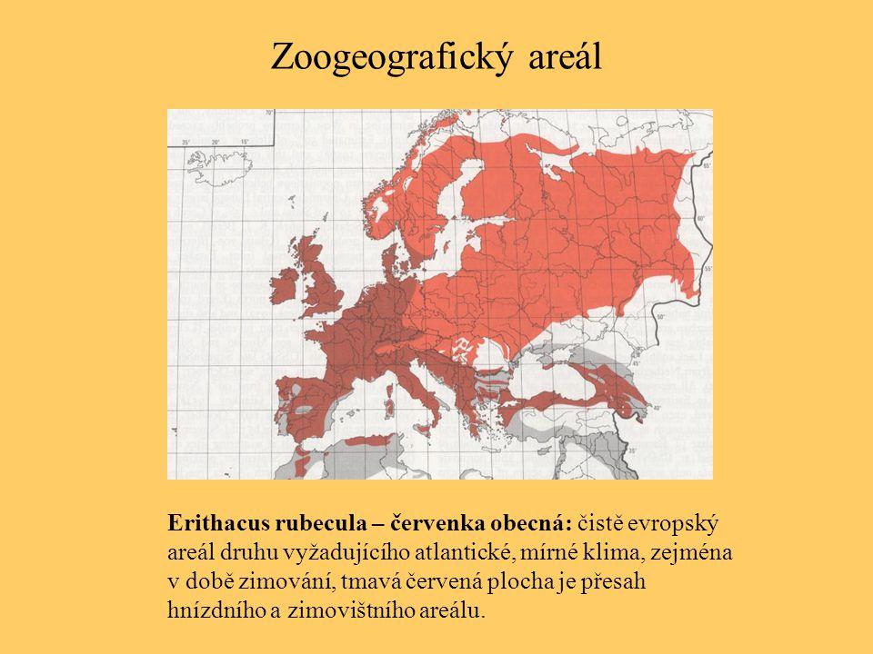 Zoogeografický areál Erithacus rubecula – červenka obecná: čistě evropský areál druhu vyžadujícího atlantické, mírné klima, zejména v době zimování, t