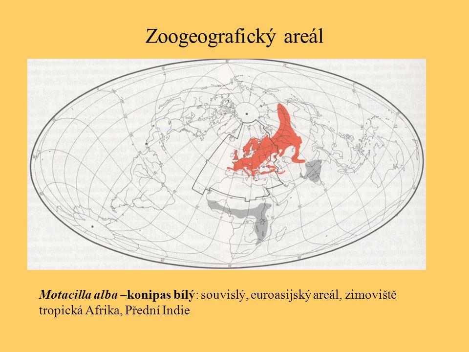 Zoogeografický areál Motacilla alba –konipas bílý: souvislý, euroasijský areál, zimoviště tropická Afrika, Přední Indie
