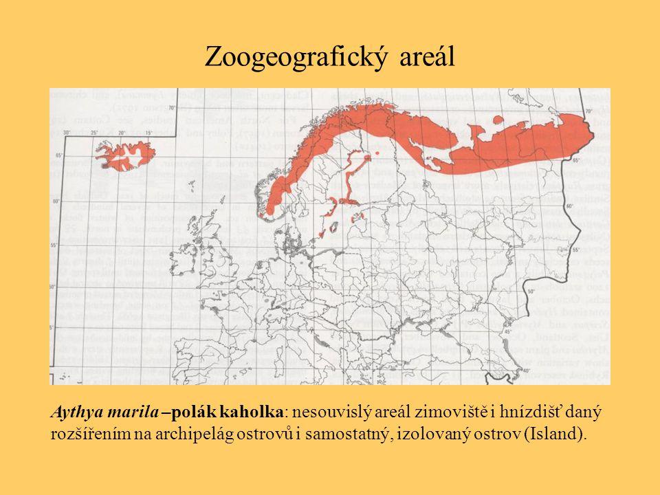 Zoogeografický areál Aythya marila –polák kaholka: nesouvislý areál zimoviště i hnízdišť daný rozšířením na archipelág ostrovů i samostatný, izolovaný