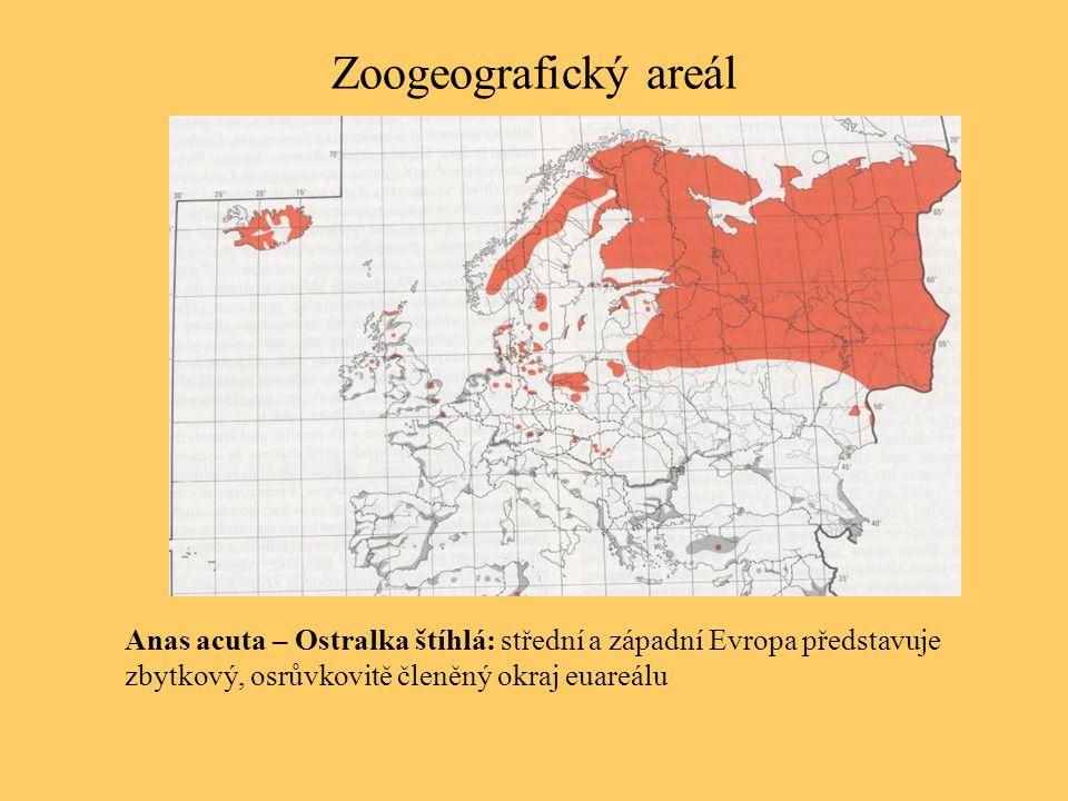 Zoogeografický areál Anas acuta – Ostralka štíhlá: střední a západní Evropa představuje zbytkový, osrůvkovitě členěný okraj euareálu