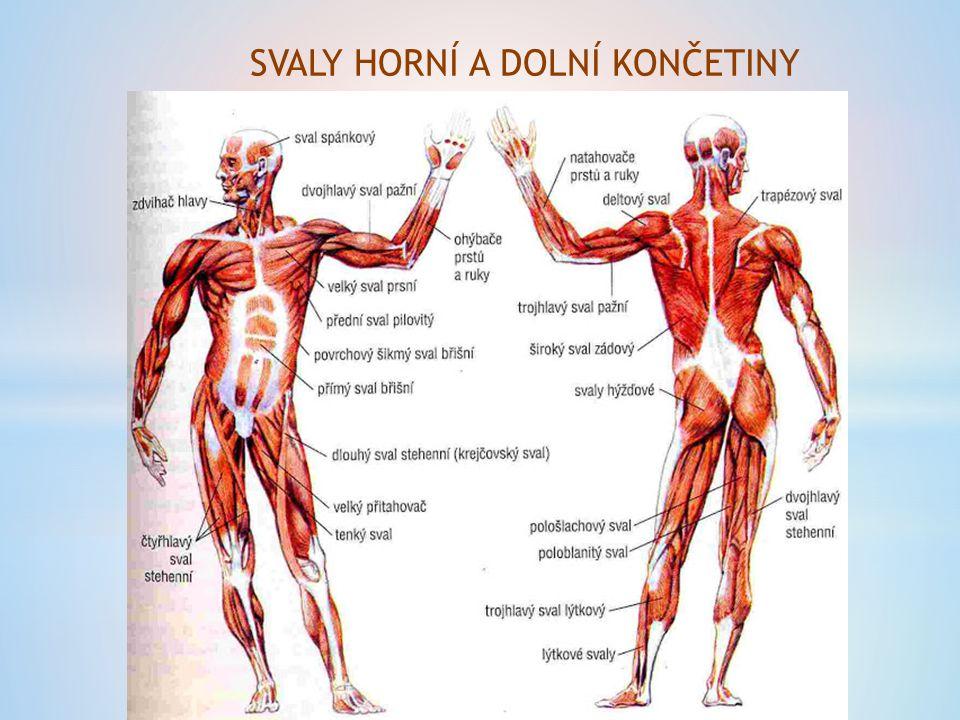 ONEMOCNĚNÍ akutní revmatismus (bakteriální infekce) svalová ochablost (=ATROFIE) úbytek svalové hmoty u dlouhodobě ležících pacientů obrna = neschopnost ovládat svaly (důsledek poškození mozku, míchy nebo nervů)