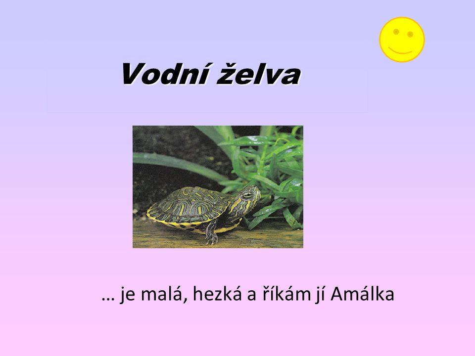 Vodní želva … je malá, hezká a říkám jí Amálka