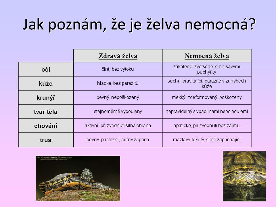 Jak poznám, že je želva nemocná? Zdravá želvaNemocná želva oči čiré, bez výtoku zakalené, zvětšené, s hnisavými puchýřky kůže hladká, bez parazitů suc