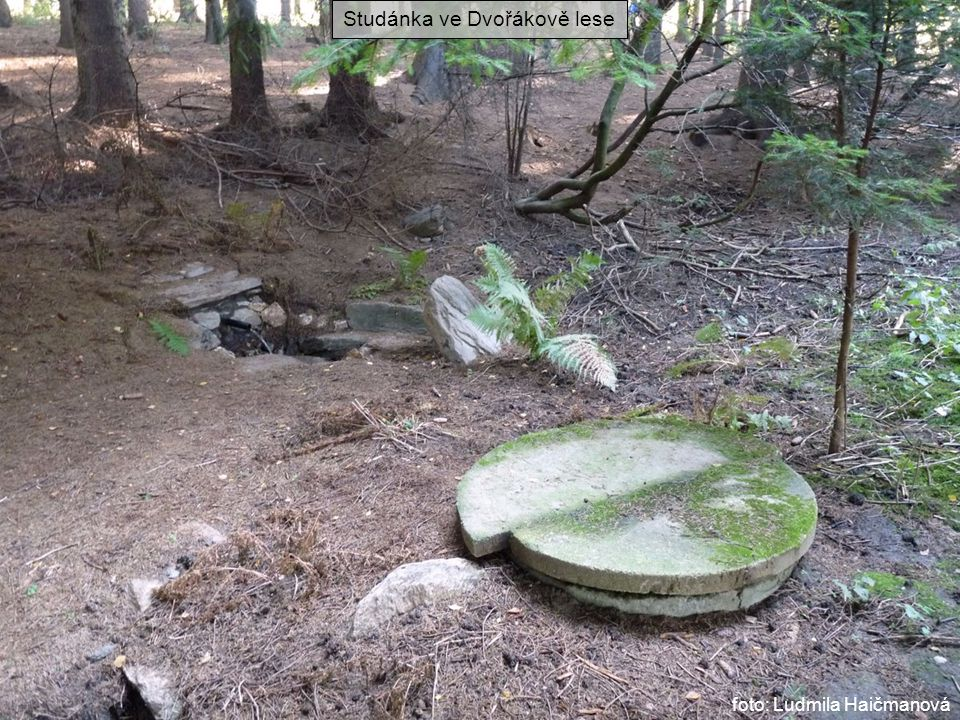 Studánka ve Dvořákově lese