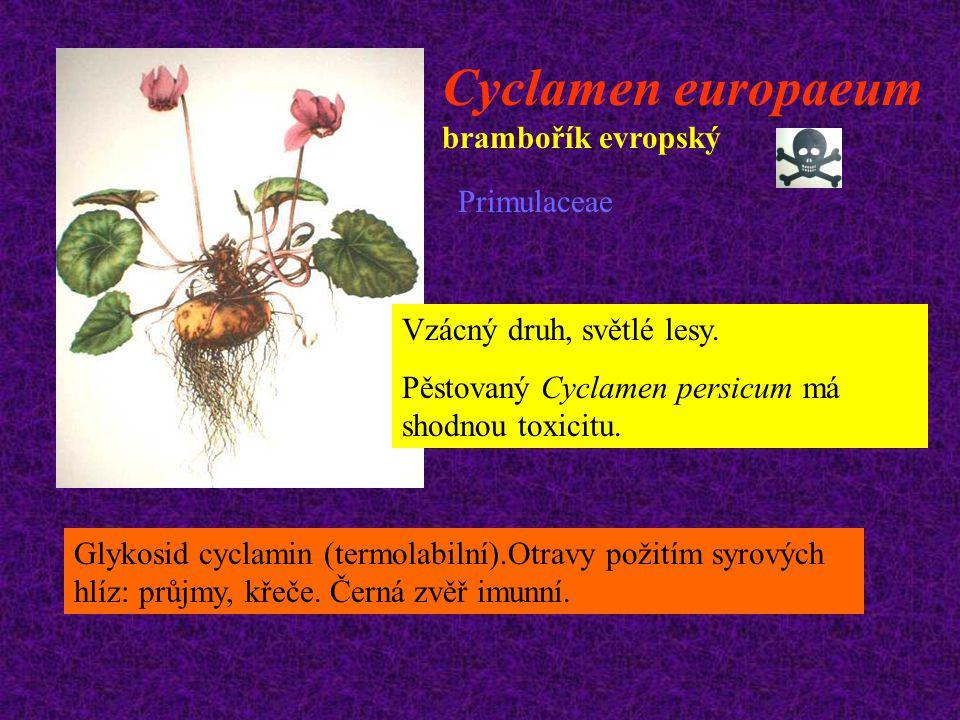 Cyclamen europaeum brambořík evropský Primulaceae Vzácný druh, světlé lesy. Pěstovaný Cyclamen persicum má shodnou toxicitu. Glykosid cyclamin (termol