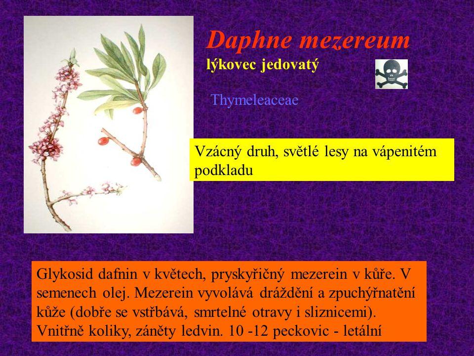 Daphne mezereum lýkovec jedovatý Thymeleaceae Vzácný druh, světlé lesy na vápenitém podkladu Glykosid dafnin v květech, pryskyřičný mezerein v kůře. V