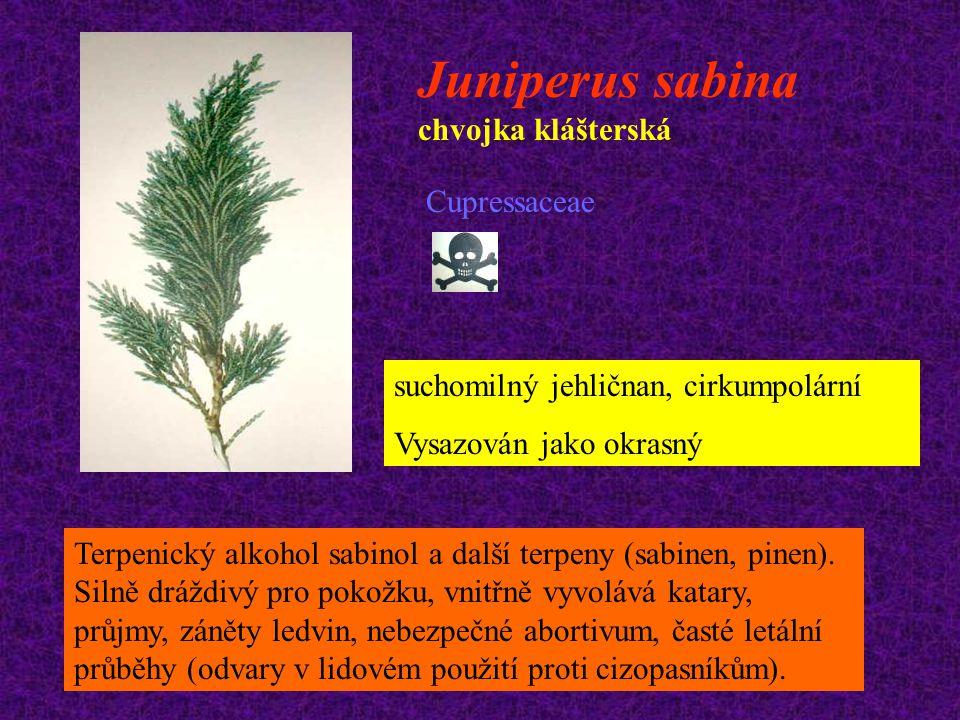 Juniperus sabina chvojka klášterská Cupressaceae suchomilný jehličnan, cirkumpolární Vysazován jako okrasný Terpenický alkohol sabinol a další terpeny
