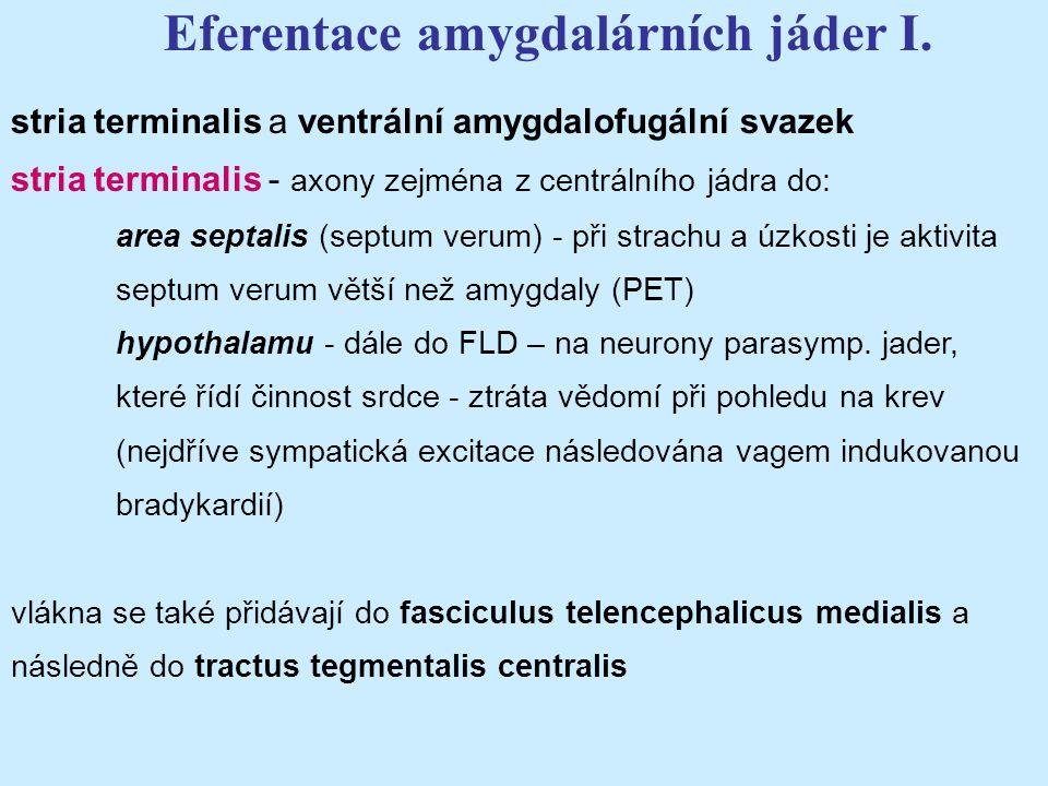 stria terminalis a ventrální amygdalofugální svazek stria terminalis - axony zejména z centrálního jádra do: area septalis (septum verum) - při strach
