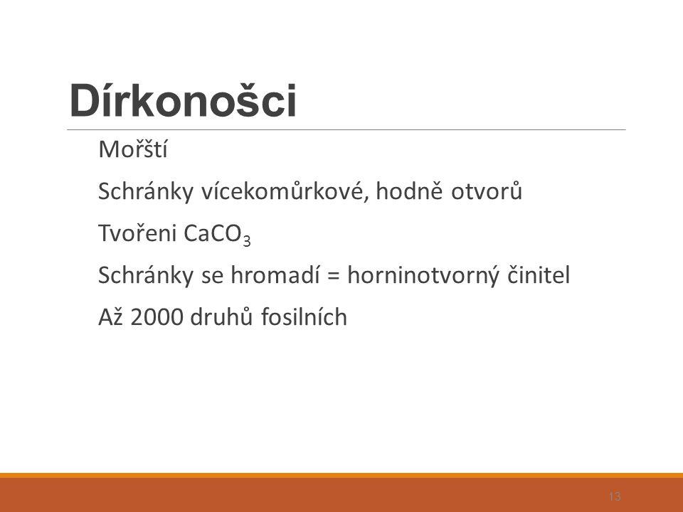 Dírkonošci Mořští Schránky vícekomůrkové, hodně otvorů Tvořeni CaCO 3 Schránky se hromadí = horninotvorný činitel Až 2000 druhů fosilních 13
