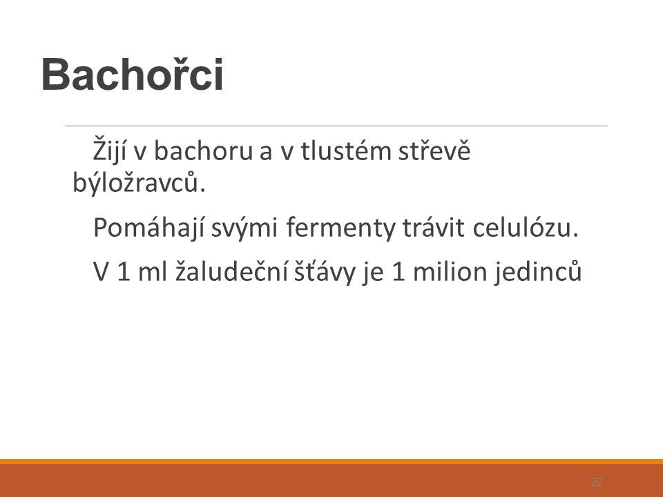 Bachořci Žijí v bachoru a v tlustém střevě býložravců. Pomáhají svými fermenty trávit celulózu. V 1 ml žaludeční šťávy je 1 milion jedinců 20